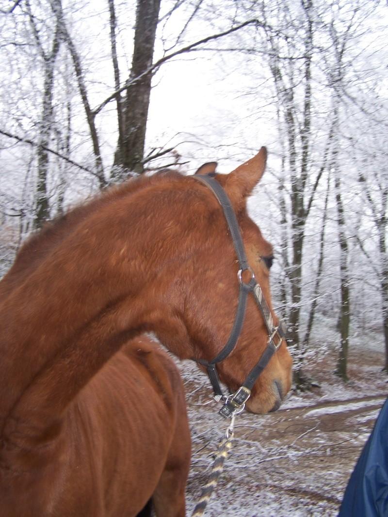 Le cheval et la neige, gagnant : Chris - Page 3 Photos10