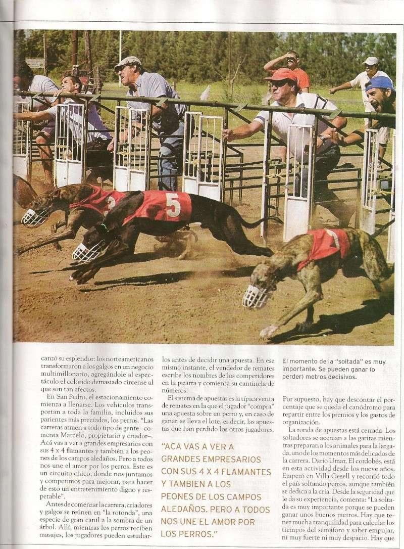Articulo argentino de galgos Federa11