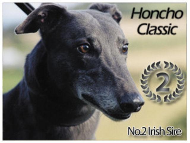 HONCHO CLASSIC Greyho13