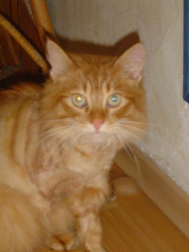 Fletcher adopté par ben'fab  (2011) Dsc03625