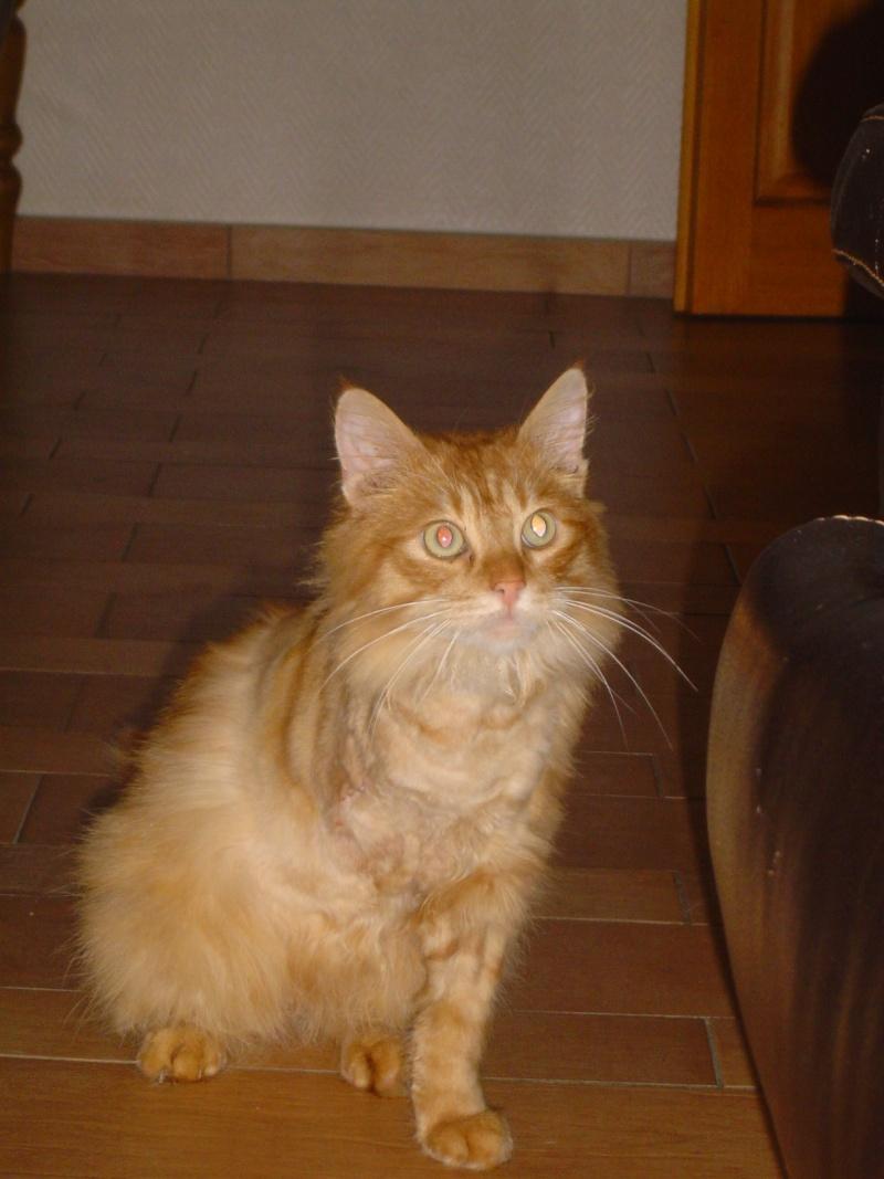 Fletcher adopté par ben'fab  (2011) Dsc03626