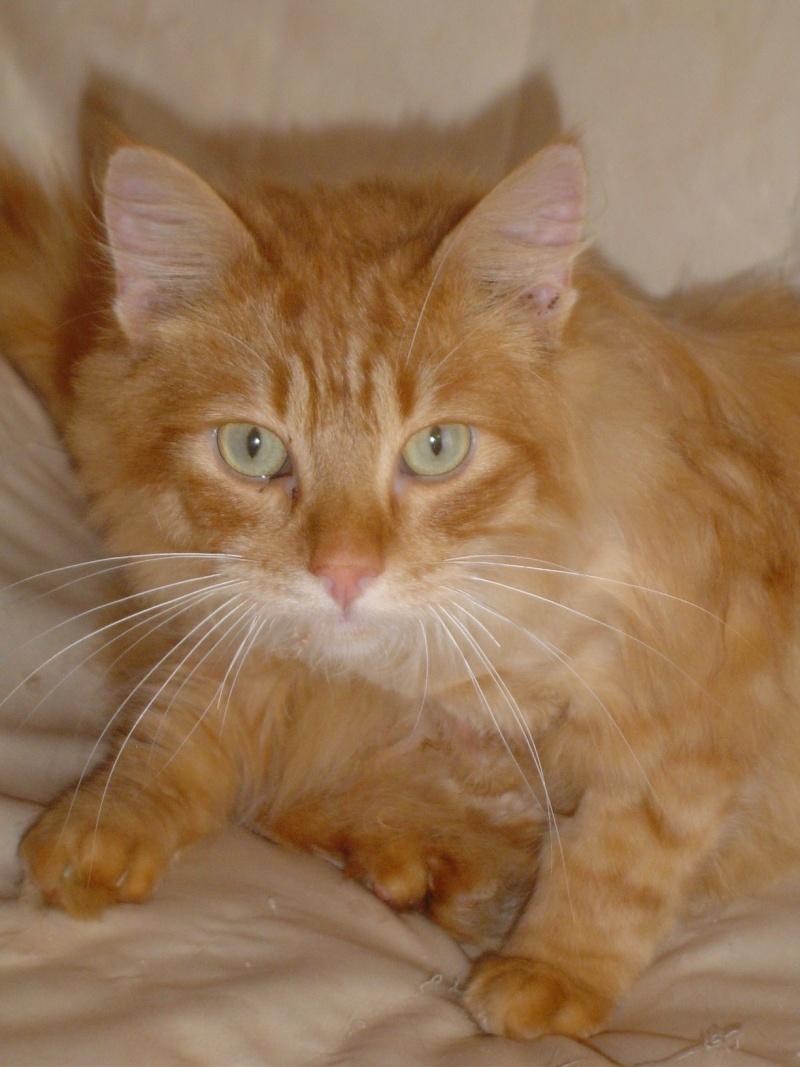 Fletcher adopté par ben'fab  (2011) Dsc03627