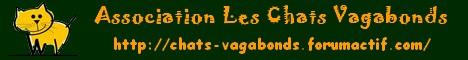 """minette grise """"souris"""" 3/4 ans, dpt16 Bannie11"""