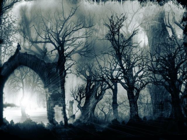 Bosque cambiante Bosque11