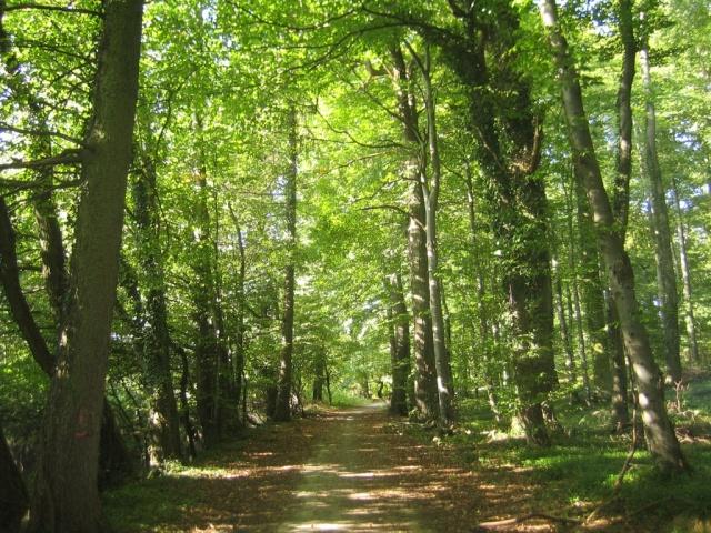 Bosque Tesseo Bosque12
