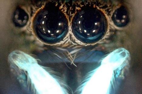 Les Araignées Araign11
