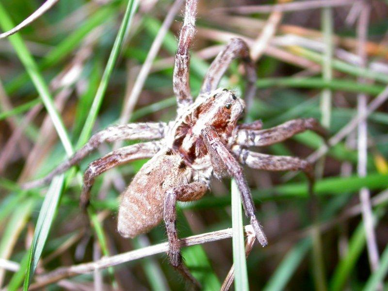 Les Araignées Araign14