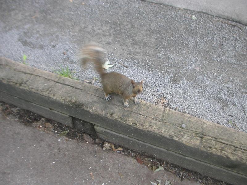 écureuil... Dscn1613