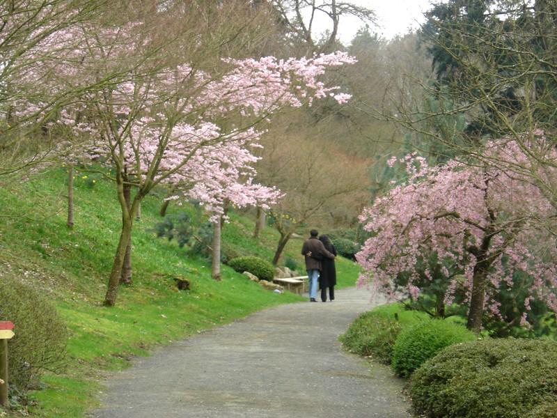Lub caij paj tawg lawm os lawv aw! ( le retour du printemps/the return of spring)  Dsc08422