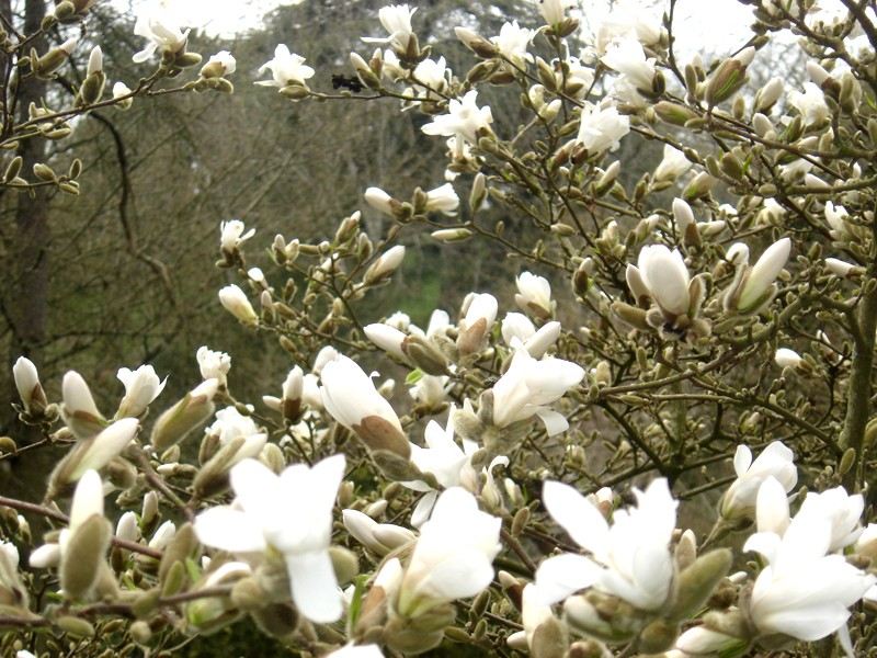 Lub caij paj tawg lawm os lawv aw! ( le retour du printemps/the return of spring)  Dsc08515