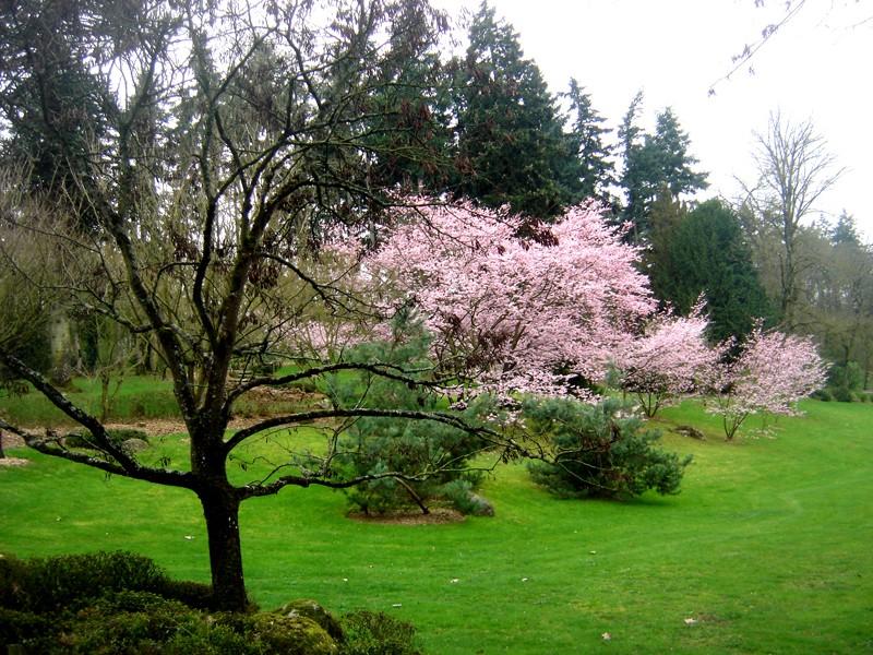Lub caij paj tawg lawm os lawv aw! ( le retour du printemps/the return of spring)  Dsc08613