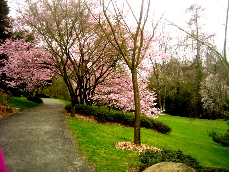 Lub caij paj tawg lawm os lawv aw! ( le retour du printemps/the return of spring)  Dsc08614