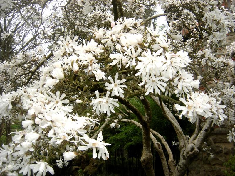 Lub caij paj tawg lawm os lawv aw! ( le retour du printemps/the return of spring)  Dsc08616
