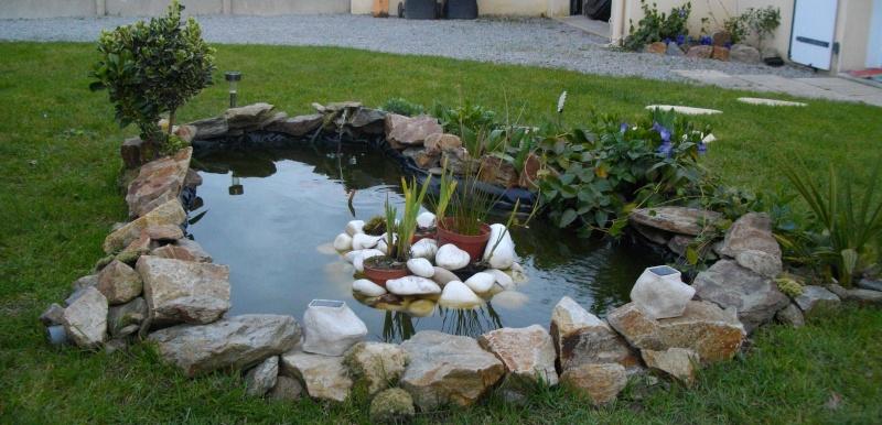 mon petit bassin!(bassine!!!) - Page 3 Imgp1312
