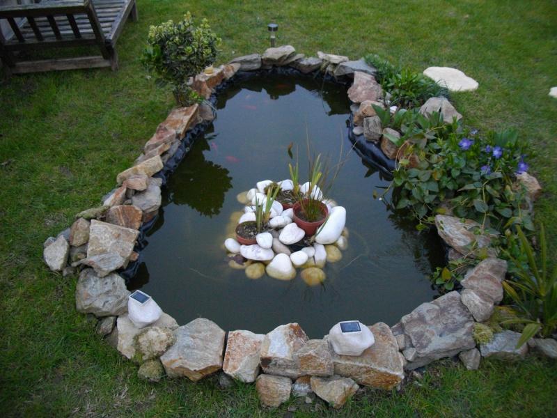 mon petit bassin!(bassine!!!) - Page 3 Imgp1313