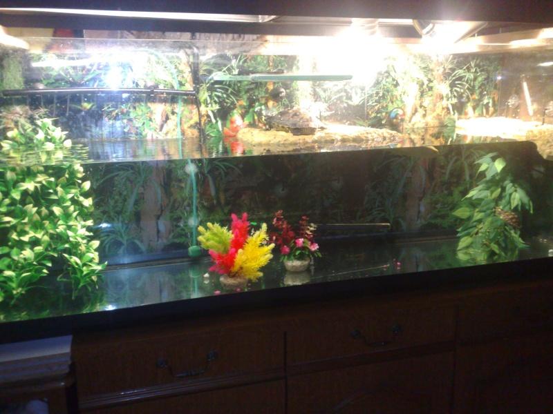 Mon Aquarium & mes Tortues 05062018