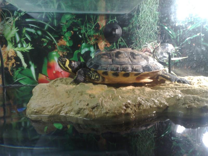 Mon Aquarium & mes Tortues 05062019
