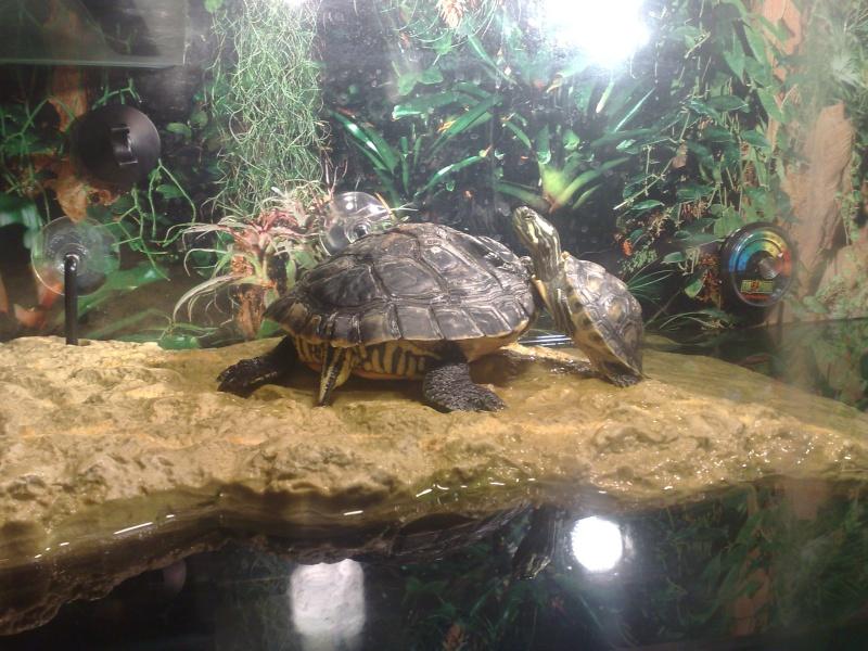 Mon Aquarium & mes Tortues 06062010