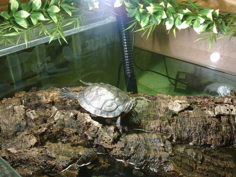 Mon Aquarium & mes Tortues - Page 2 07032021