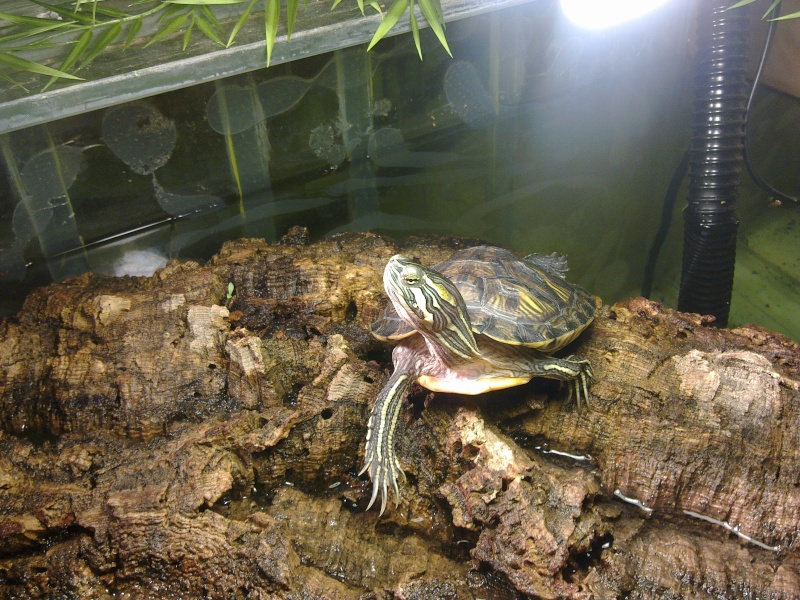 Mon Aquarium & mes Tortues - Page 2 07032024