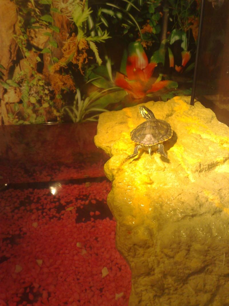 Mon Aquarium & mes Tortues 29052014