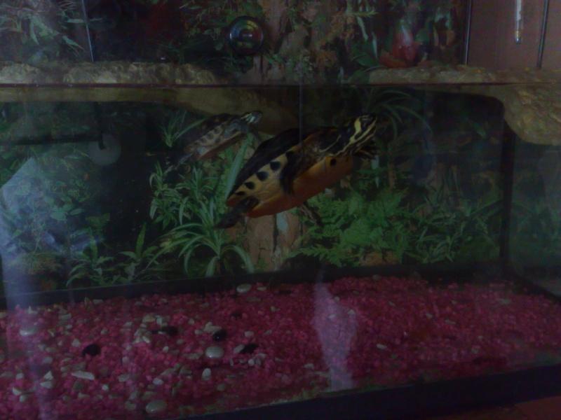 Mon Aquarium & mes Tortues 30052012