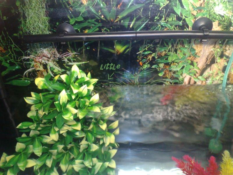 Mon Aquarium & mes Tortues Little11