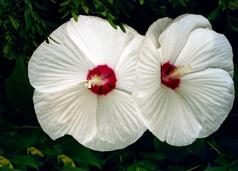 Spring flower pictures. Flower10