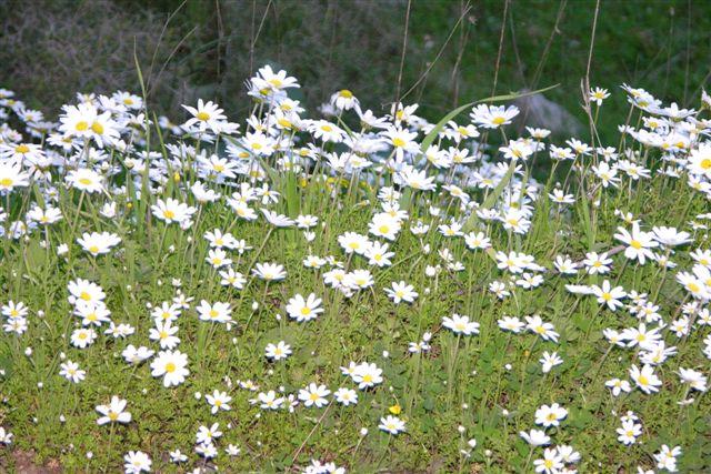 Spring flower pictures. Mounta10