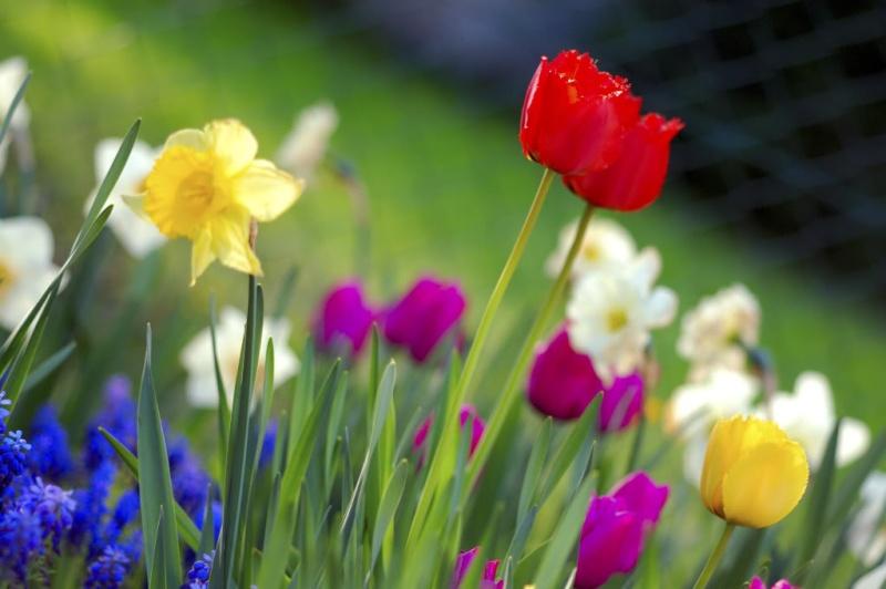 Spring flower pictures. Spring11