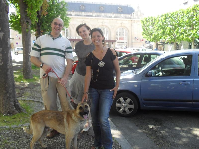 SOS pour Silver, Croisé Malinois de 2 ans (49) Adopta11