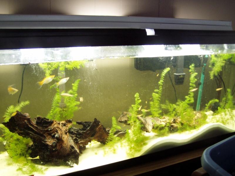 brackish aquarium