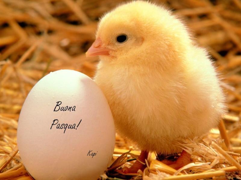 x augurarvi una gioiosa e serena pasqua Pasqua10