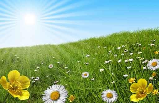 E primavera !!!!! Primav10