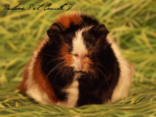 Noouuvelles photos :D Photo_12