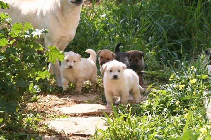 cani sette taglia medio-grande regalo Adotta10