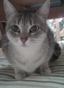 L'angolo del Gatto - Pagina 2 00510