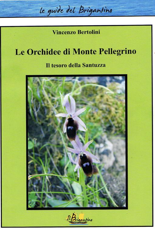 Orchidées du Monte Pellegrino Img00110