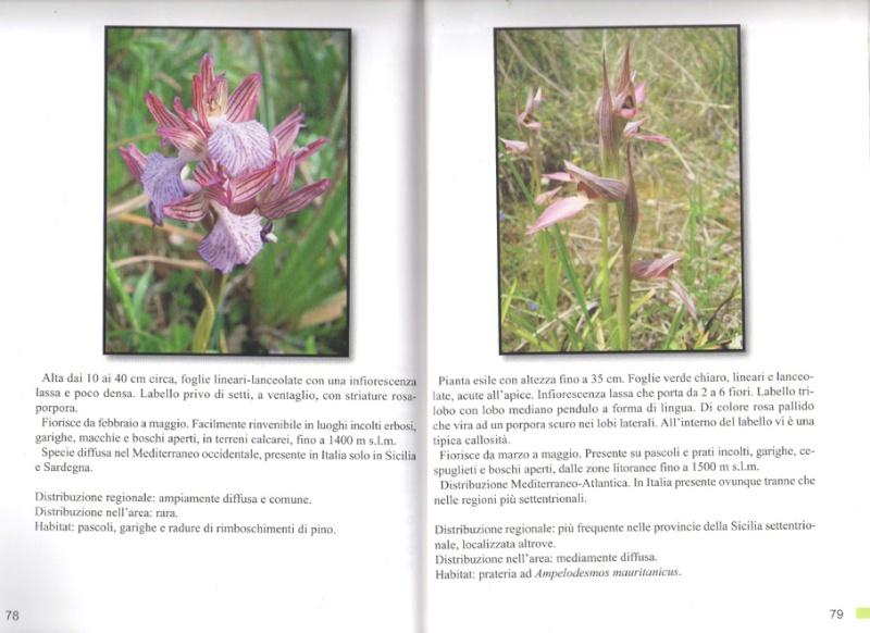 Orchidées du Monte Pellegrino Img00310