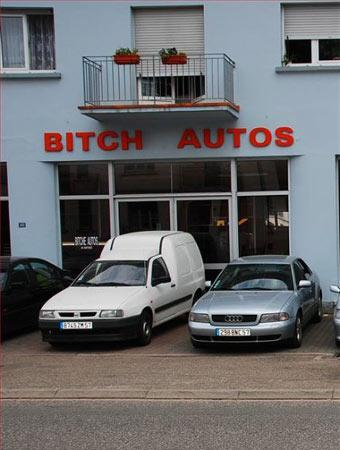 photo drole - Page 7 Bitch-10