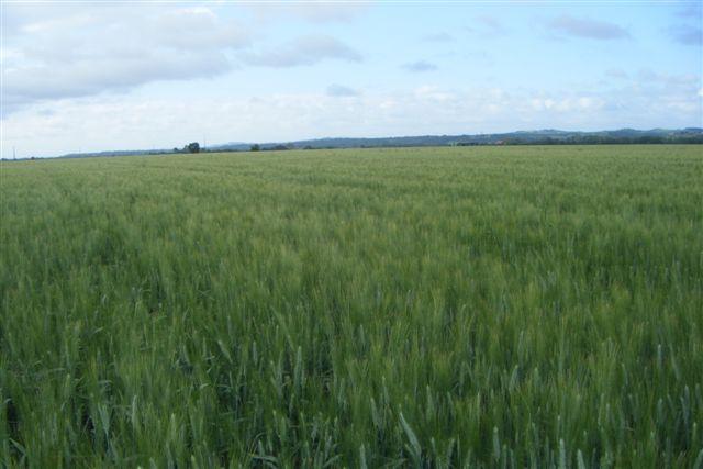 Etat des blés durs Dscf1310