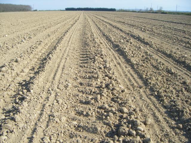 semis de maïs Dscf2321