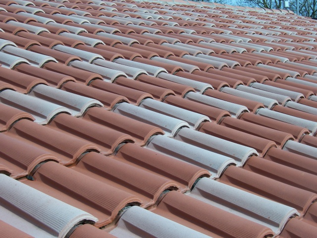 Mousses de toit. Toitur11