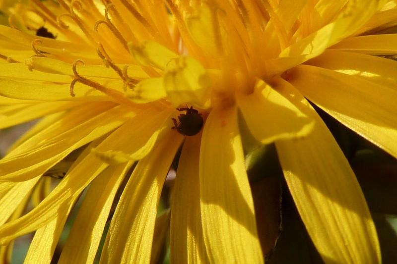 Fichue toile d'araignée qui colle... Edit et rajouts Bebete10