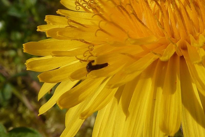 Fichue toile d'araignée qui colle... Edit et rajouts Bebete12