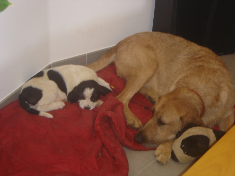une maman et ses petits qui risque de retourné dehors Dsc06914