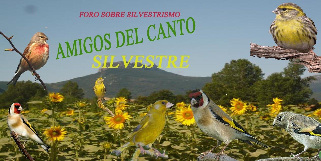 Amigos del canto silvestre - cam online P2fafr10