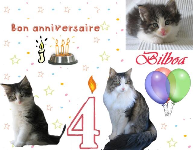 Anniversaire des chats 4_ans_10