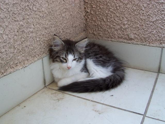 Spécials Photos : Avant/Après de nos chats 4ame_j11