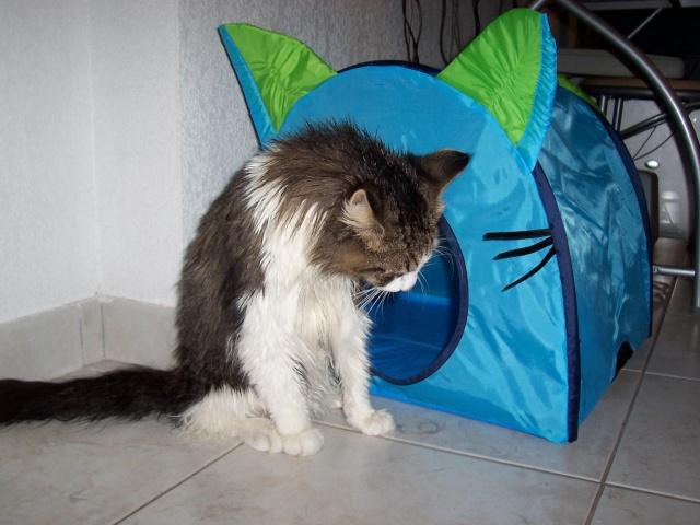Le poids des chats Bilboa14